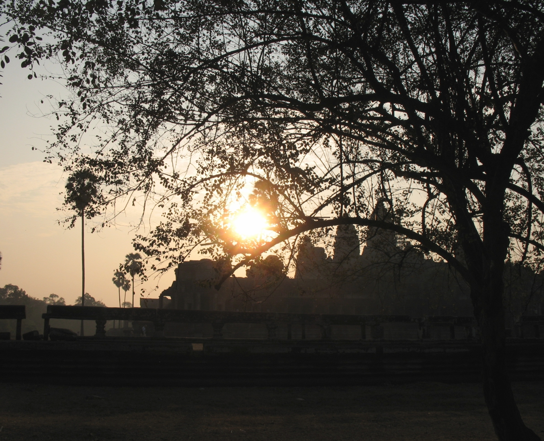 Angkor Wat sunrise thru the trees.