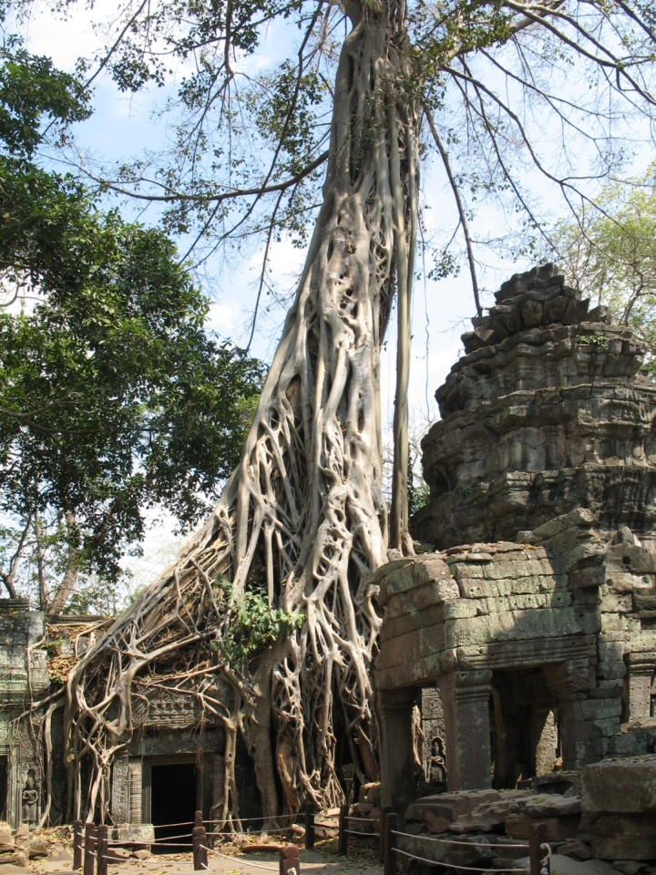 Ta Prohm with trees growing out of the crumbling structures