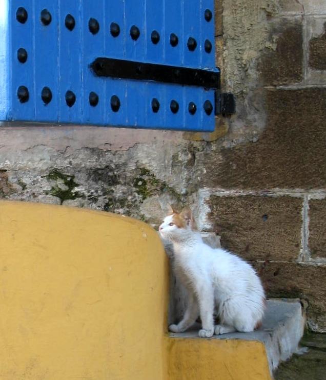 A cat in the Casablanca citadel.