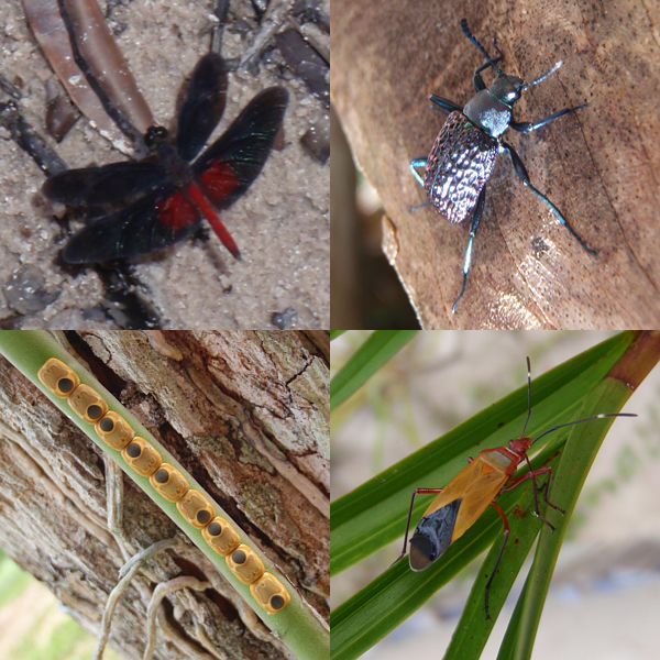 Collage of bugs in the Amazon.