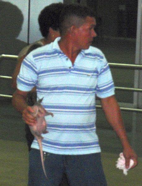 Baby armadillo inside Manaus Airport