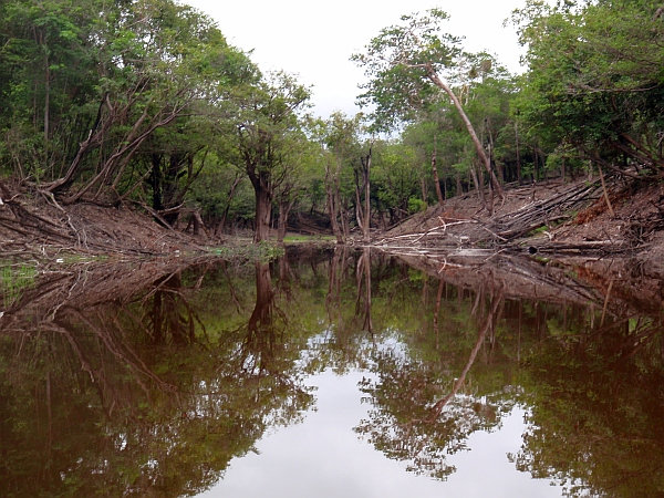 Amazon River tributary.